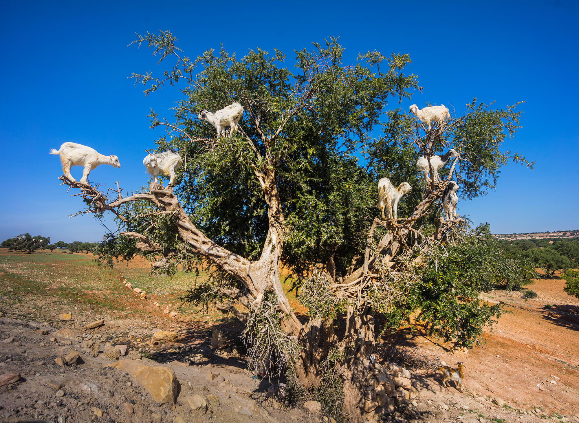 Sahara Desert Tour - Trekking Around Morocco - Anti Atlas