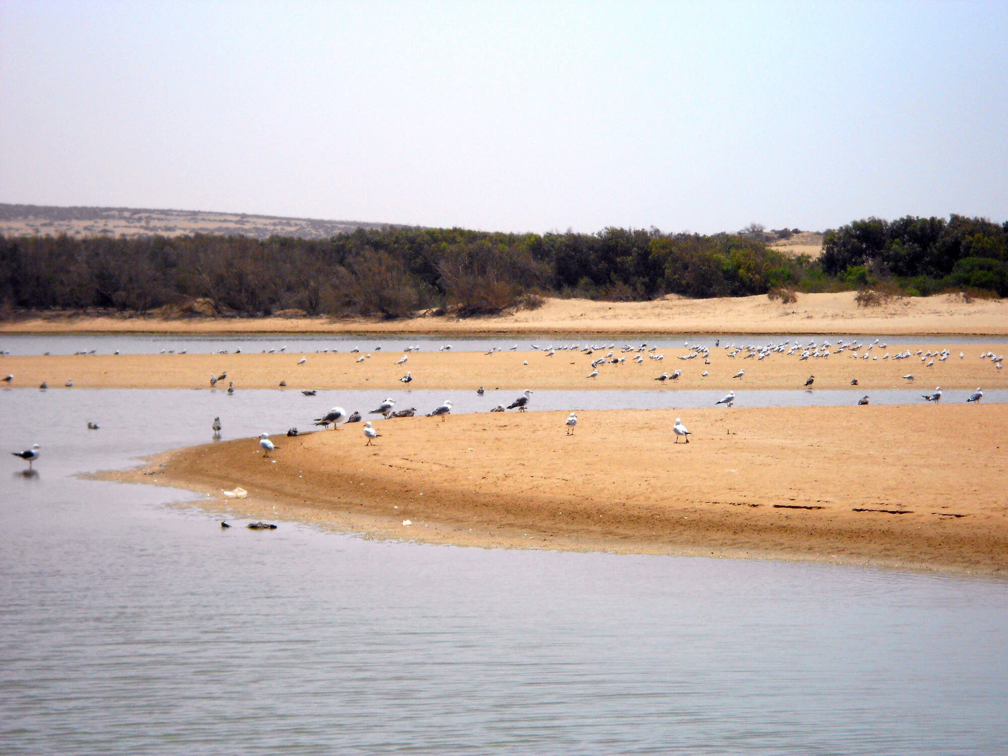 What to Do and See in Agadir, The Popular Holiday Destination of Morocco - Souss Massa National Park