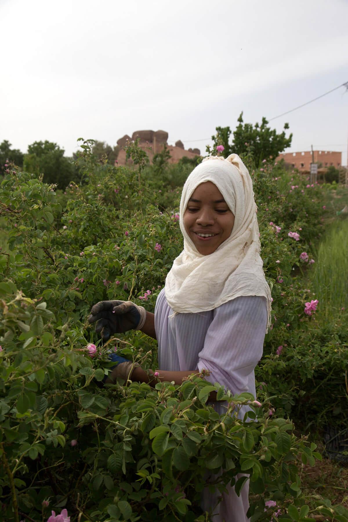 Sahara Desert Tour - Festivals: Discover a More Intimate Side of Morocco - Festival of the Roses